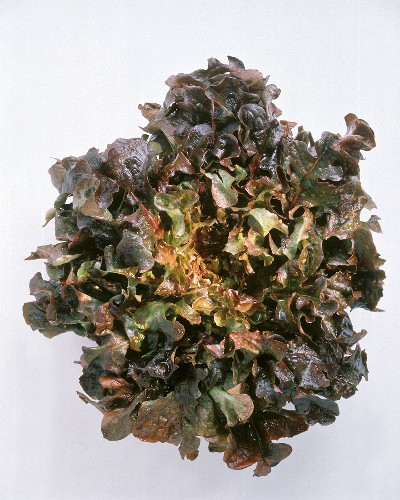 Head of Oak Leaf Lettuce
