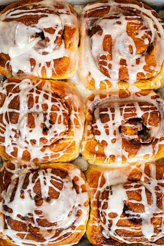 Sourdough cinnamon rolls glazed with icing on a tray