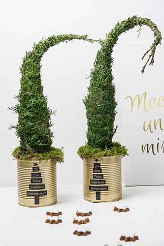 Little Christmas trees in tin cans painted gold