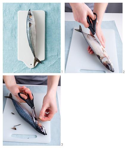 Mackerel being prepared