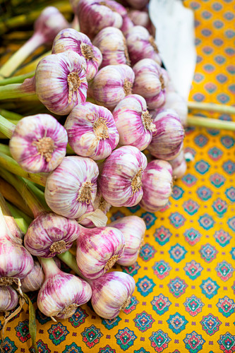 Fresh garlic on a bright yellow tablecloth with a blue pattern