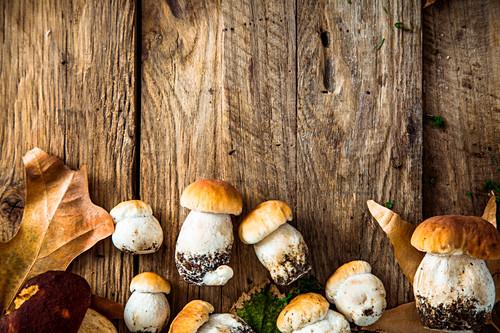 Frische Steinpiize mit Laub und Moos auf Holzuntergrund