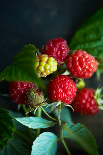 Raspberries on a sprig (close-up)