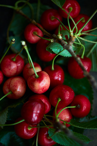 Cherries with leaves and twigs