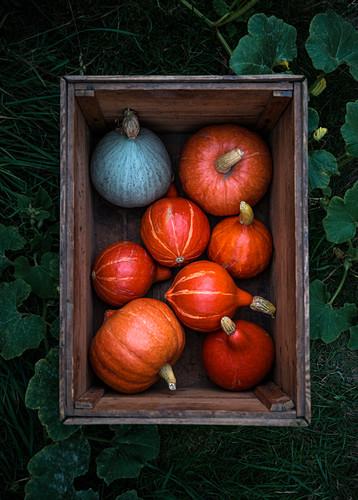Various pumpkin in a wooden box