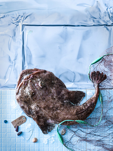 Monk fish with a fishing net on a blue surface