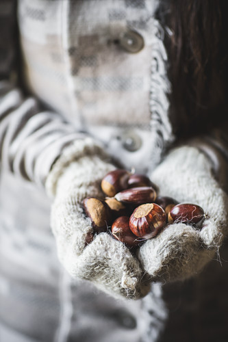 Whole chestnuts being held in hands wearing ivory woolen mittens