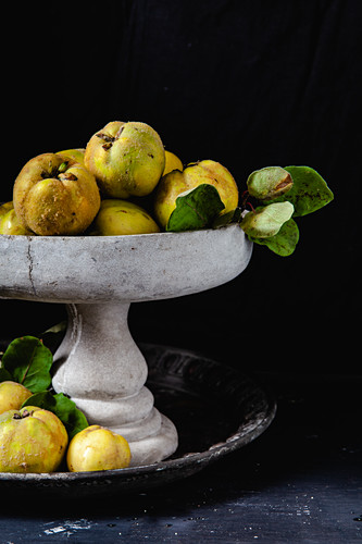Quinces in stone bowl