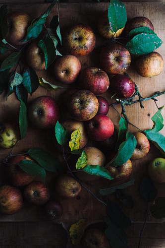 Frisch gepflückte Äpfel auf Holzuntergrund