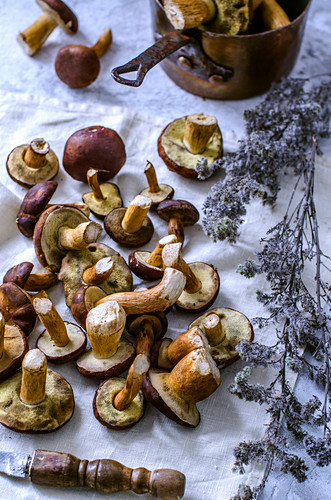 Freshly cut forest edible mushrooms on a towel and dried flowers