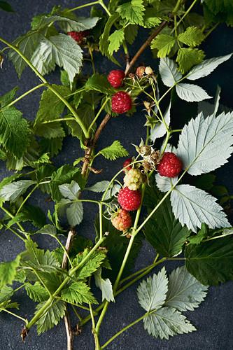 Freshly harvested raspberries with sprigs