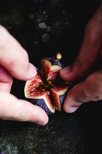 Opening Fig