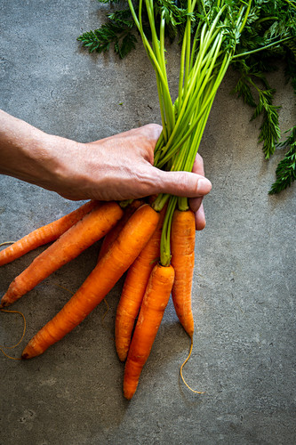 A hand holding a bunch of carrots on a stone surface