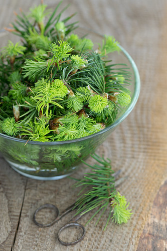 Spruce sprouts in a glass bowl on a wooden table
