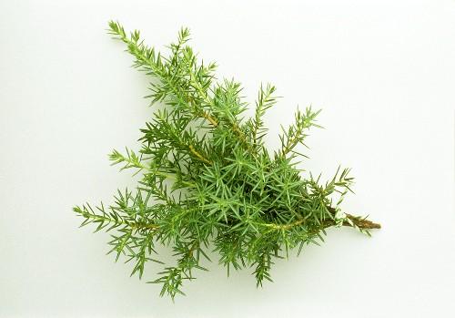A bunch of juniper