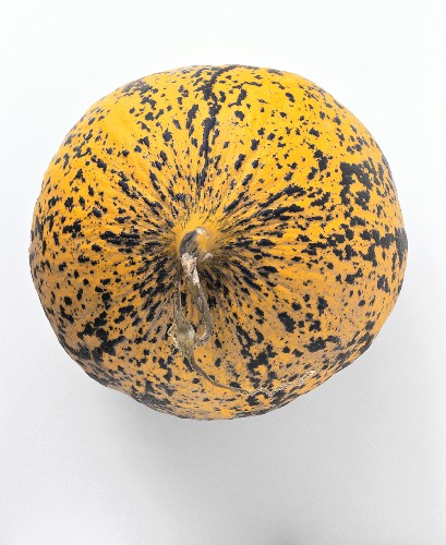 Turkish musk melon (from above)