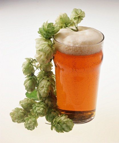English Lager in a Glass with Hops