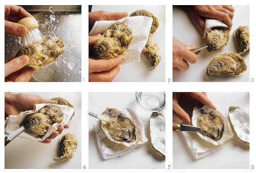Opening oysters