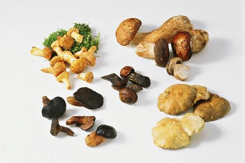 Various mushrooms on white background
