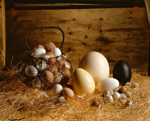 Still life with various eggs