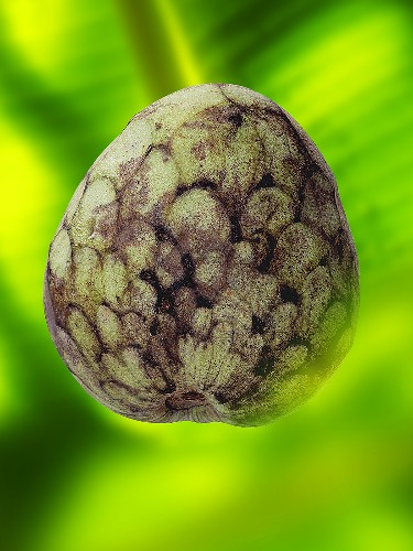 A cherimoya on green background