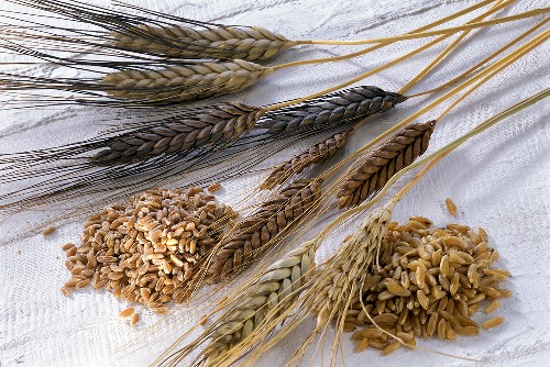 Cereal grains and ears (Emmer and Einkorn)