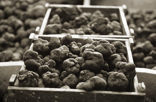 Black truffles in crates (b/w  photo)