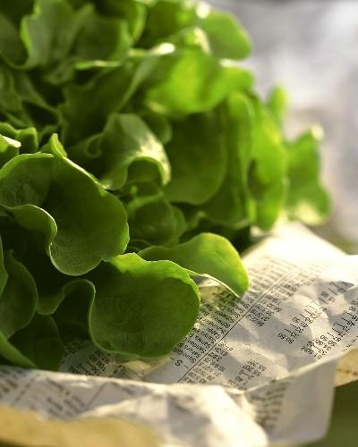 Green oak leaf lettuce on newspaper