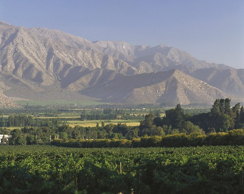 Vineyards in Valle del Aconcagua, Chile