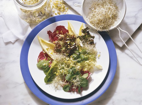 Mixed Greens Salad with Sprouts