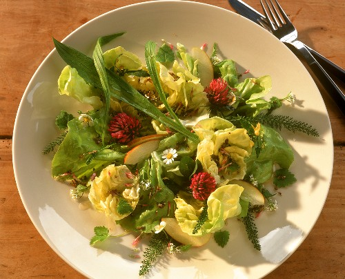 Green salad with ribwort plantain, herbs and daisies