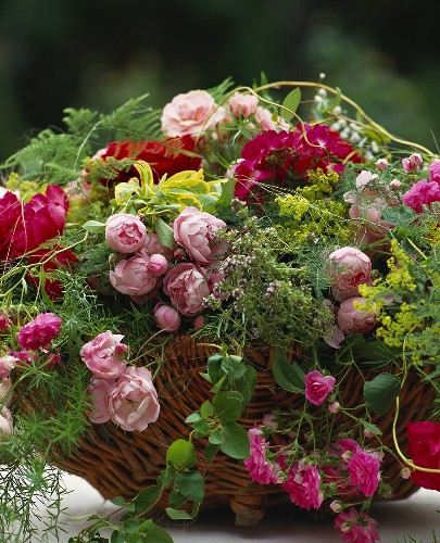Basket of roses in various shades of red with asparagus fern