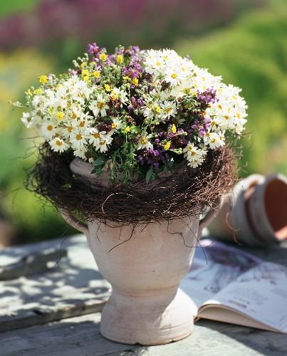 Summer marguerites and French lavender in goblet