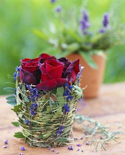 Arrangement of roses in terracotta pot wrapped in herbs & twigs
