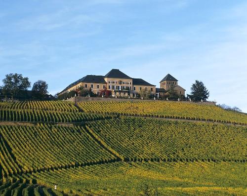 Schloss Johannisberg with its Riesling vineyard, Rheingau