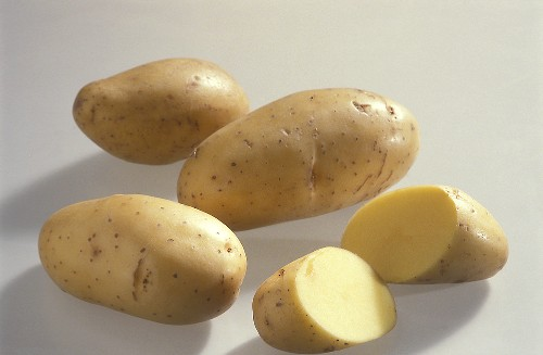 Several early potatoes, variety 'Annabelle'