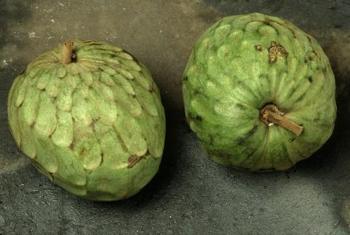 Two cherimoya, whole fruits