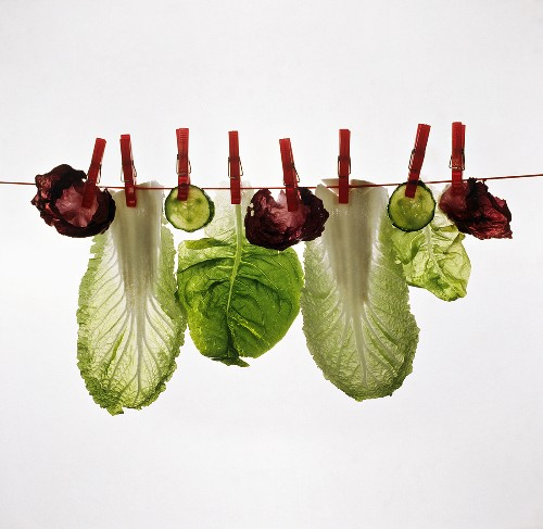 Various salad leaves and cucumber slices on clothes line