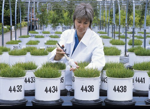Grass in pots at agricultural testing station