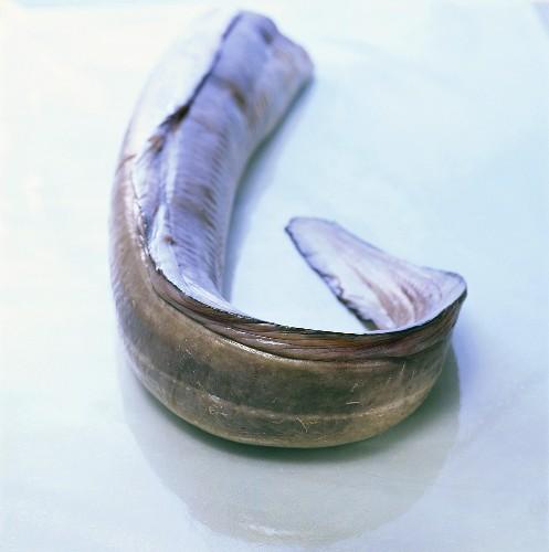 Fresh saltwater eel