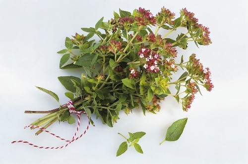 A bunch of oregano with flowers