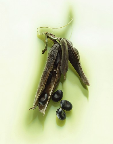 Black lima beans - Europe's first beans