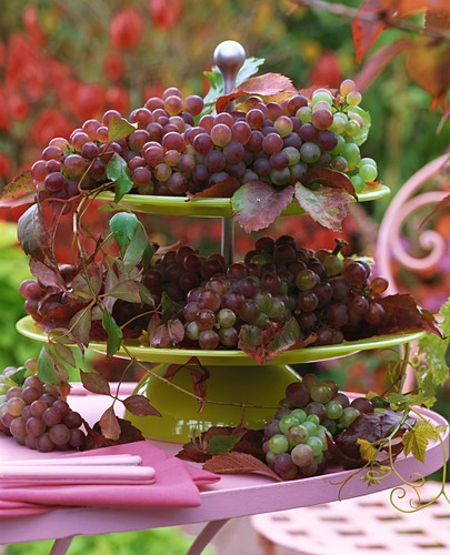 Red grapes on tiered stand with Boston ivy leaves