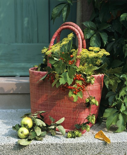 Bag filled with dill, Viburnum berries and hops