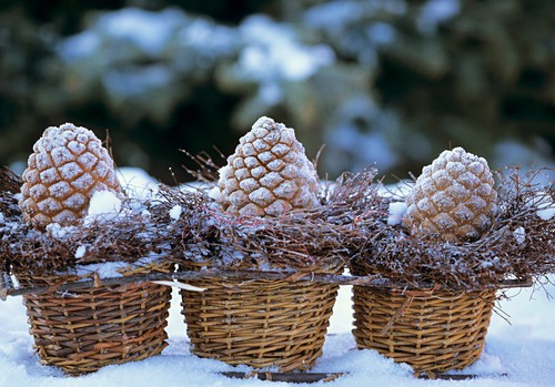 Pine cones in willow baskets with snow