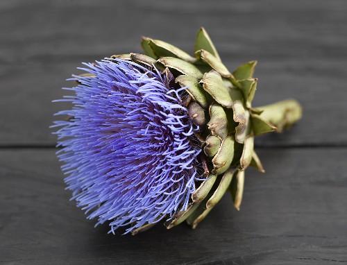 Artichoke flower on wooden table