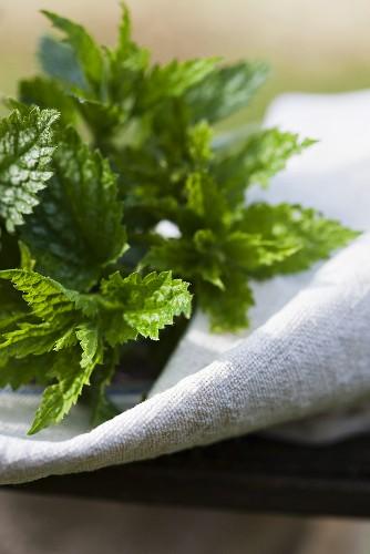 Fresh nettle tips on linen cloth