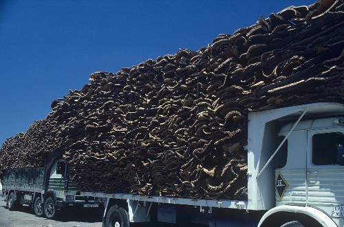 Wagons loaded with cork oak