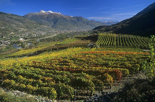 Aymavilles wine-growing area, Aosta Valley, Italy