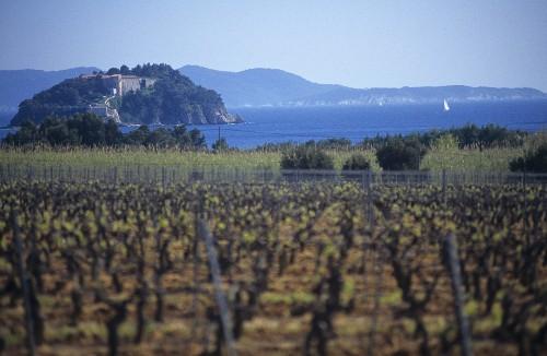 The Cap de Bregancon in the background, Côtes de Provence